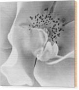 Peek-a-boo In Black And White Wood Print