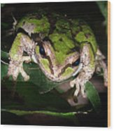 Peek A Boo Pacific Tree Frog Wood Print