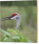 Peek-a-boo Sandhill Crane Wood Print
