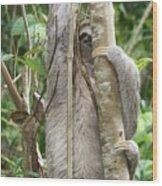 Peek-a-boo Sloth Wood Print