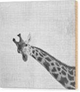 Peekaboo Giraffe Wood Print