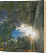 Peekaboo Tree Wood Print