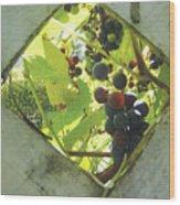 Peeking At Grapes Wood Print