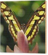 peeking Butterfly Wood Print