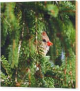 Peeking From The Pines Wood Print