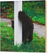 Peeking Kitty Wood Print