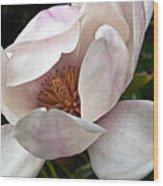 Peeking Magnolia Wood Print