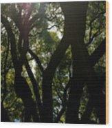 Peeking Through Again Wood Print