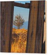 Peeking Thru Wood Print