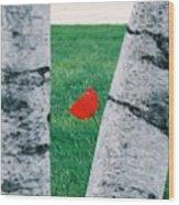 Peeking Tulip Wood Print