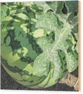 Peeking Watermelon Wood Print
