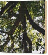 Peeks Of Sun Rays Wood Print