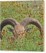Peep-eye Wood Print
