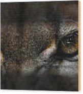 Peering Eyes Wood Print