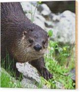 Peering Otter Wood Print
