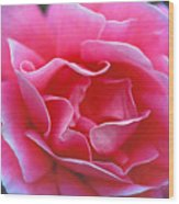 Peggy Lee Rose Bridal Pink Wood Print