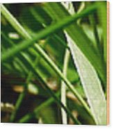 Pei Grass - Bottom Wood Print