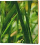 Pei Grass - Top Wood Print