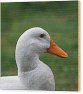 Pekin Duck 20120507_142 Wood Print