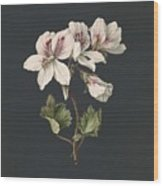 Pelargonium Album Bicolor, M De Gijselaar 1830 Wood Print
