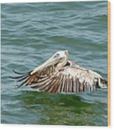 Pelecan In Flight Wood Print