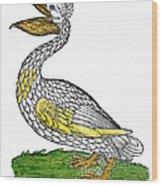 Pelican, 1560 Wood Print