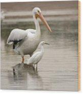 Pelican And Snowy Egret 6459-113017-1cr Wood Print