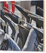 Pelican Anticipation Wood Print