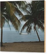 Pelican Beach Belize Wood Print