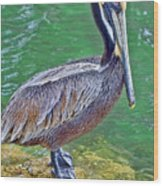 Pelican By The Pier Wood Print