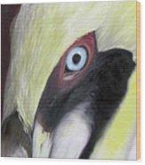 Pelican Closeup 1 Wood Print