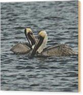 Pelican Couple Wood Print
