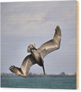 Pelican Diving For Dinner Wood Print