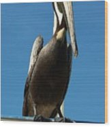 Pelican Dreams Wood Print