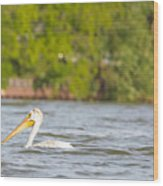 Pelican Drifting Along Wood Print