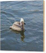 Pelican Eating Dinner Wood Print