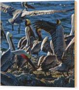 Pelican Fiesta Wood Print