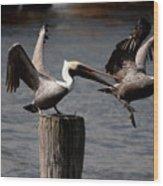 Pelican Fight Wood Print