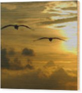 Pelican Flight Into The Clouds Wood Print