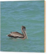 Pelican Floating In The Tropical Waters In Aruba Wood Print