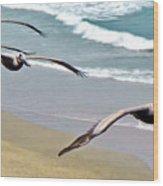 Pelican Fly-by Wood Print