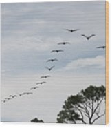 Pelican Formation Wood Print