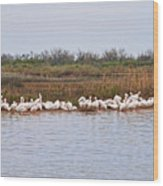 Pelican Gathering Wood Print