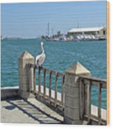 Pelican Gazing At Port Canaveral In Florida Wood Print