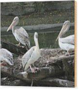 Pelican Grouping Wood Print
