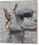 Pelican Having Supper Wood Print