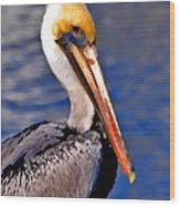 Pelican Head Shot Wood Print