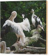 Pelican Hideaway Wood Print