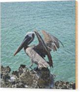 Pelican In Aruba Landing On Lava Rock Wood Print