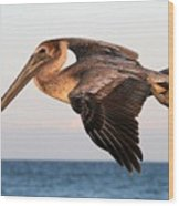 Pelican In Flight At Sunset Wood Print